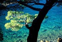 Dalmacja Region Dubrovnik - wyspa Mljet